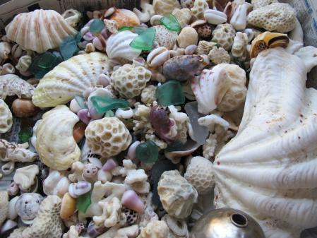ペムチ浜の貝殻