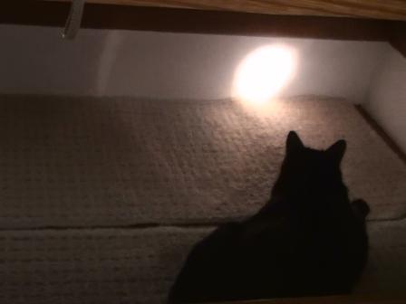 光追う黒豚2
