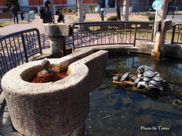 小さな池と 水飲み場 亀