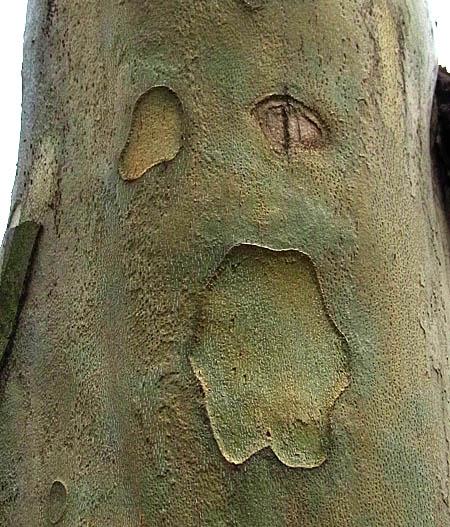 100401うめ木