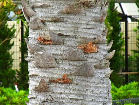 200613トゲトゲしい木