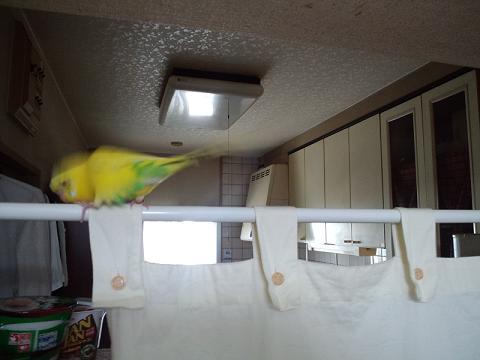 鳥でした。