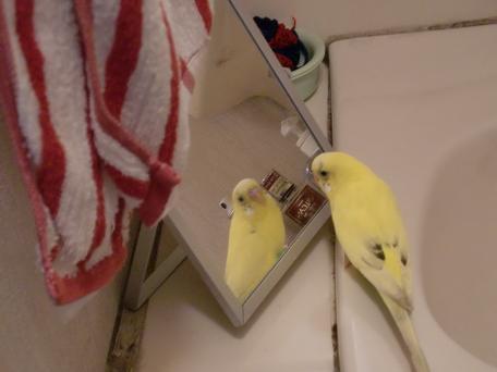 ここにも鏡が!