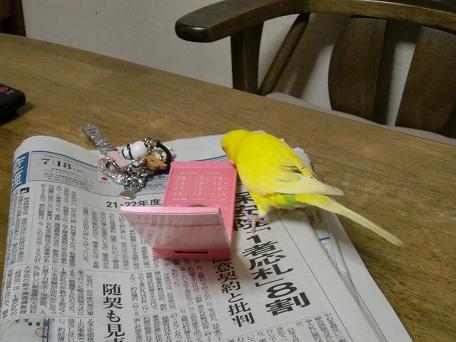 ピンクと黄色!