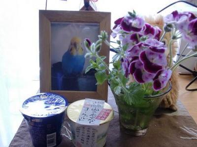 ピーさんのお花