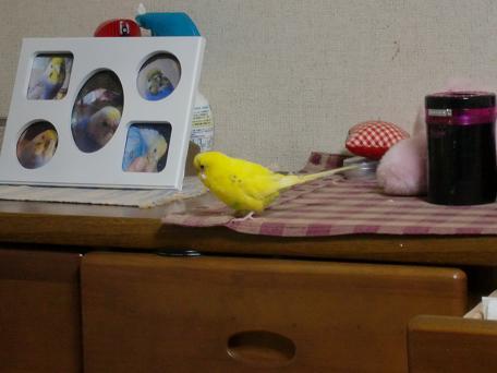 ぷりんの写真と