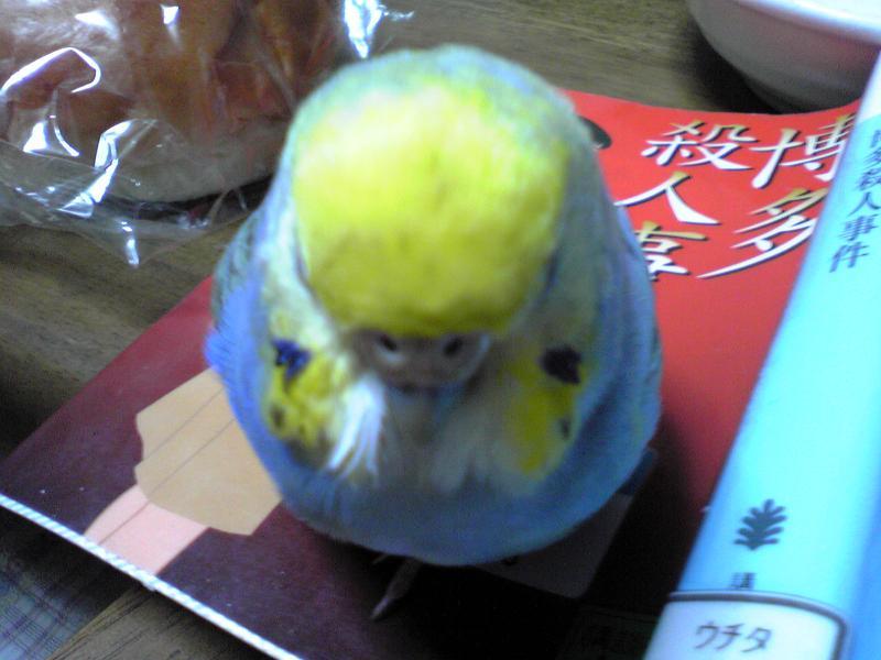 黄色いアタマ