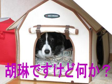 001_20091228194157.jpg