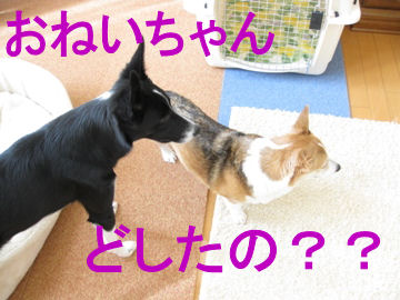 002_20091228194157.jpg