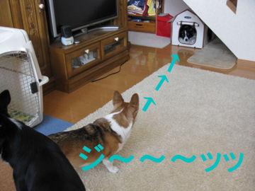 004_20091228194853.jpg
