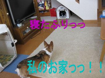 005_20091228194157.jpg