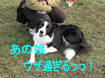 011_20091127090752.jpg
