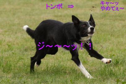 218_20090824081923.jpg