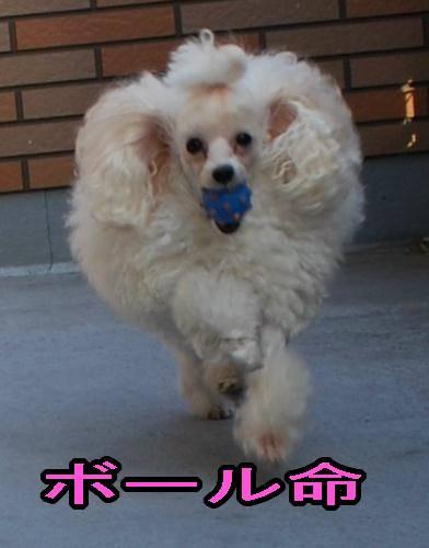 20080108-karin.jpg
