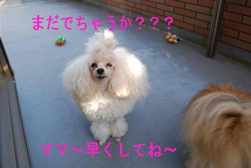 20080108-karin2.jpg