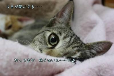 K_eorL_X.jpg