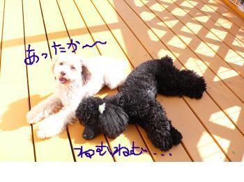 snap_karmin351_200922223456.jpg