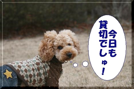 IMG_2787bb1.jpg