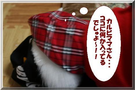 IMG_3538bb.jpg