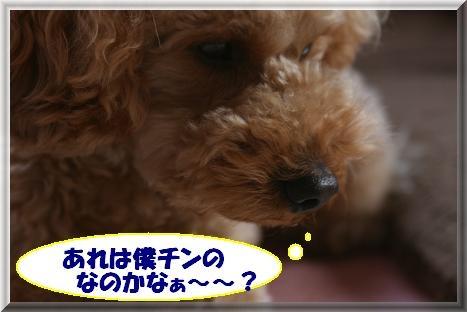 IMG_3851.jpg