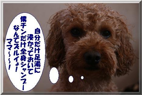 IMG_4011.jpg