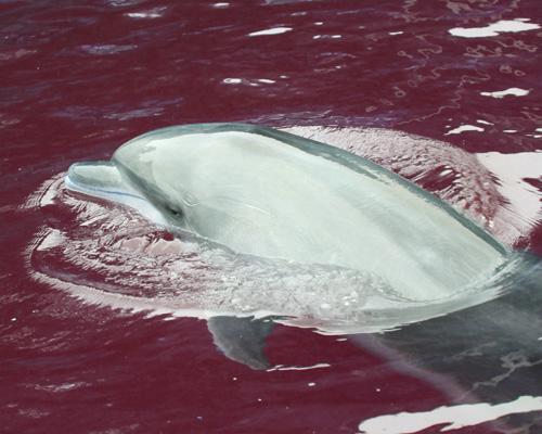 イルカの写真(色調補正)