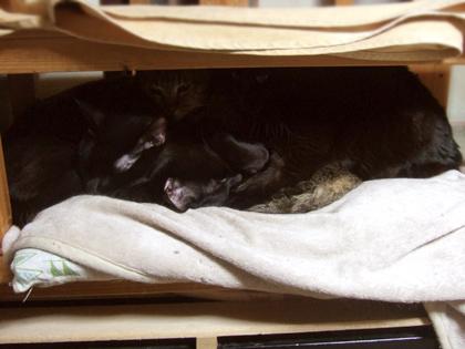 キャッチしにくい場所で、更に猫団子で難易度はベリーハード