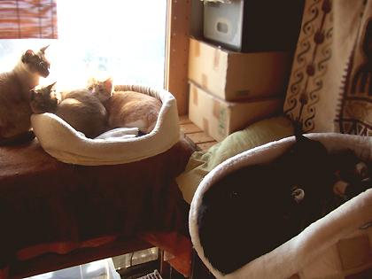 部屋に数ある猫ベッドの中の2つでこの状態、、密着度高し