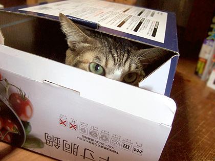 箱を開けて出てくるのは誰かしら?(*´艸`*)