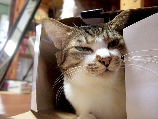 「箱の中の鍋?美味しく頂いちゃったけど何か?」