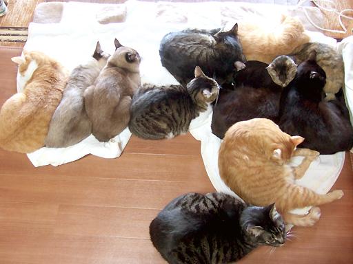 おもいっきりの11にゃんの猫団子