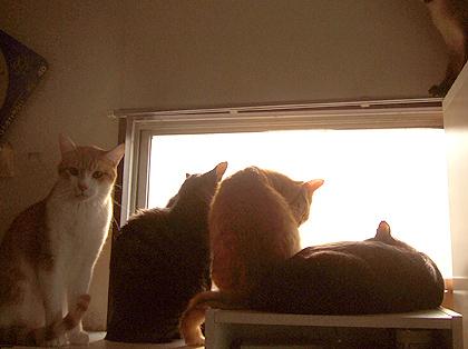 (左から)ノル、ねぎ、トー、くま、(右上あんよ、もみじ)