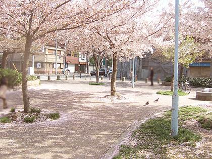 クロちゃんのいる公園、、、鳩のアーちゃん・ウーちゃん、ノルと出会った場所だったりします