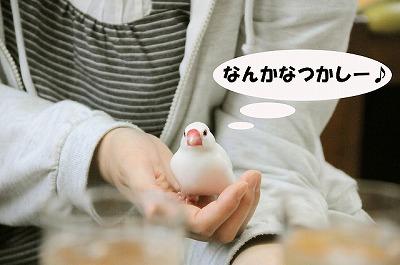 チィちゃん、ゆきさんの手の中は居心地よさそう^^