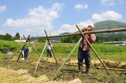 090921稲刈り2