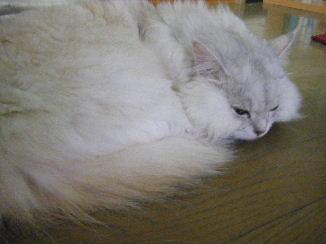 オカタンも寝てるから僕も寝るのです