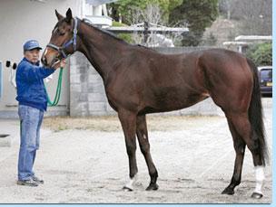 カレイジャスミン 京都牝馬S