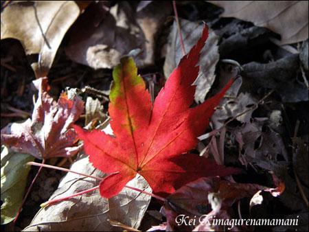 落ちていた紅葉の葉♪