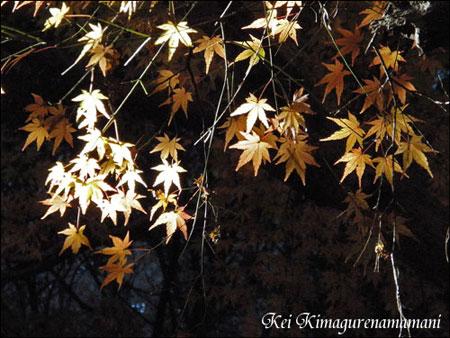 光が当たる紅葉♪