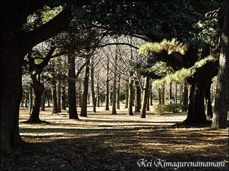 代々木公園の奥♪