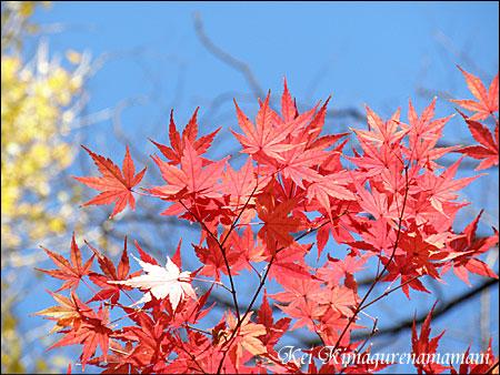 代々木公園の紅葉♪