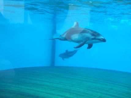イルカ遠い