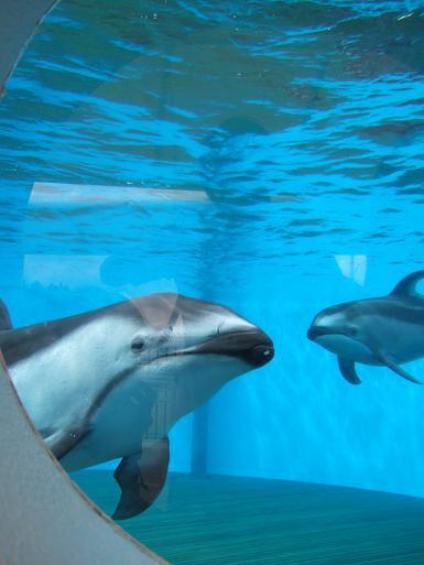 イルカ2頭