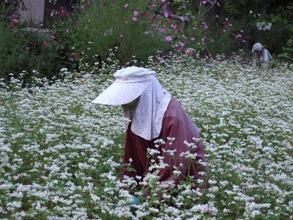 そばの花 なごろかかし