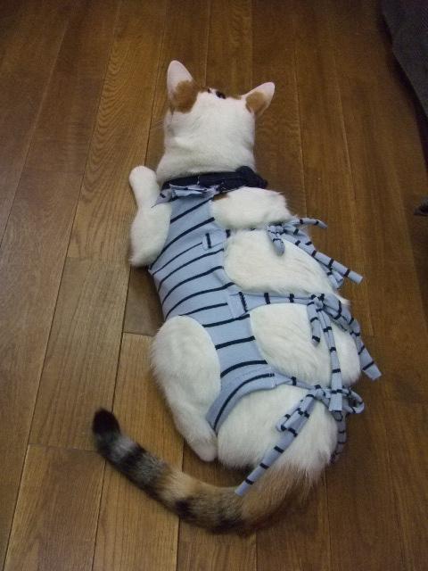 ケムリにお願い~猫の里親日記~ : 術後服作り