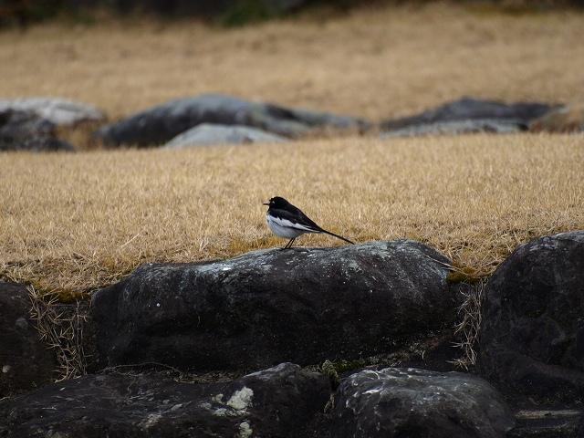 櫛形野鳥2
