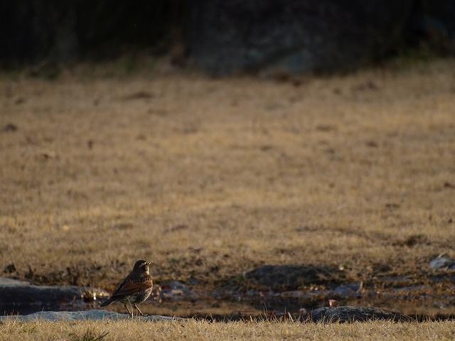 櫛形野鳥9