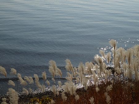 浜名湖SA公園ススキ