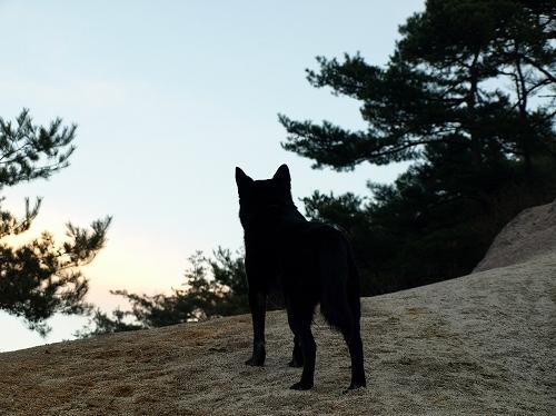 夕日のクロ