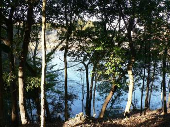 木の間の池